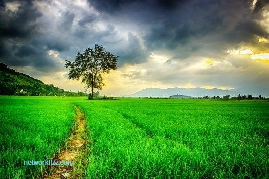 perfect clicks of mother nature - networkfizz.com
